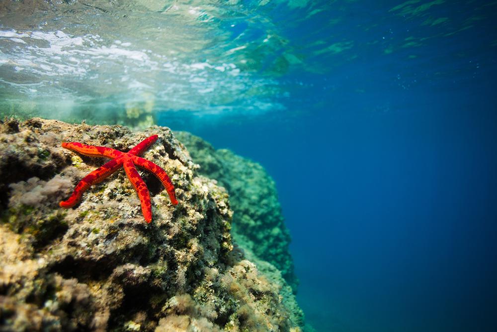 underwater Google Search comic