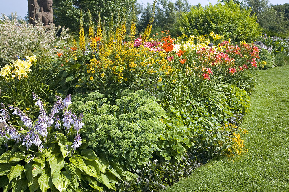 25 good landscaping plants with flowers for Great bushes for landscaping